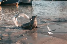 A seal in Hout bay harbour Seal, Photography, Animals, Photograph, Animales, Animaux, Fotografie, Photoshoot, Animal