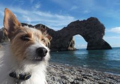 In this dog friendly destination guide, we help you plan your perfect pet friendly holiday to Dorset. Inside you will find our hand-picked selection of the very best pet friendly hotels and ac… River Cottage, Dorset Camping, Glamping Holidays, Pet Friendly Holidays, Jurassic Coast, Pet Friendly Hotels, Dog Travel, Freundlich, Dog Walking