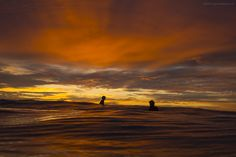 :: Vivid | Sprout Daily :: Surf Photography and Report Manly Beach Sydney Australia