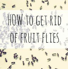 how to get rid of fruit flies household items, home maintenance repairs, how to, pest control