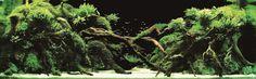 """想像を絶する""""水中の庭師""""たちの技匠 20選「世界水草レイアウトコンテスト」   DDN JAPAN"""