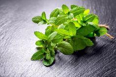 Vyrobte si meduňkový sirup a zažeňte sním nespavost a úzkosti Parsley, Spinach, Herbs, Vegetables, Plants, Gardening, Syrup, Garten, Herb