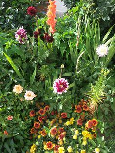 Ο κήπος μου τον Ιούνιο