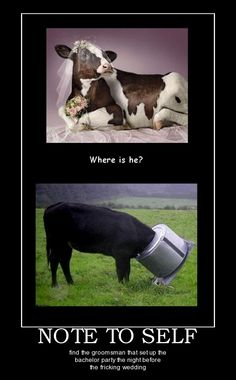 Where is he?!  - funny pictures #funnypictures