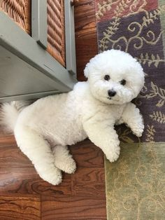 Bunny the Magnificent Super Cute Puppies, Cute Dogs And Puppies, Baby Dogs, I Love Dogs, Doggies, Bichon Dog, Baby Animals, Cute Animals, Dog Haircuts