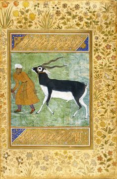 An Indian black buck being led by its keeper, by Manchar. Mughal
