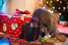 17 Cats That Ruined Christmas
