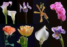 Orchids Art - Fine Art Flower Photography  by Juergen Roth