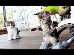 Kittens Dance With A Mop. Cha-Cha-Cha!