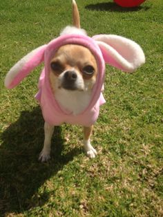 My little easter bunny