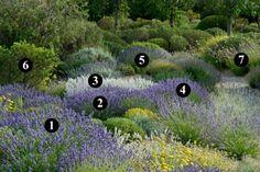 #Jardinería sostenible. Combinaciones de plantas mediterráneas para jardín seco (sin casi riego) | El Blog de La Tabla