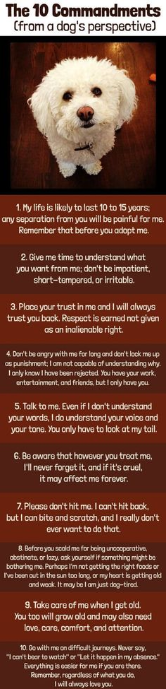 The 10 Commandments From A Dog's Perspective love cute animals dogs adorable dog amazing story puppy animal pets puppies stories heart warming good people heartwarming