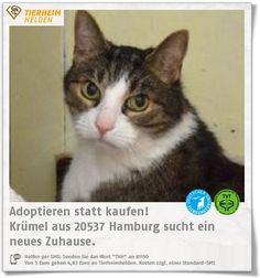 Krümel wurde im Tierheim Süderstraße abgegeben, weil er angeblich aggressiv war.  http://www.tierheimhelden.de/katze/tierheim-hamburg/ekh_braun_schwarz_getigert_weisse_abzeichen/kruemel/13551-1/  Im Tierheim zeigt sich Krümel bisher freundlich, auch wenn er sich nicht immer anfassen lassen will. Im neuen Zuhause sollte er Möglichkeit zu Freigang haben. Andere Katzen kennt