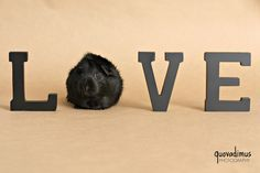 Money can't buy happiness but it can buy guinea pigs.(which is pretty much the same thing :)