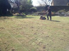 Lawncare Scarification, Great Bourton, Oxfordshire Trimming Hedges, Lawn Care, Surrey, Garden Landscaping, Grass, Landscape, Front Yard Landscaping, Scenery