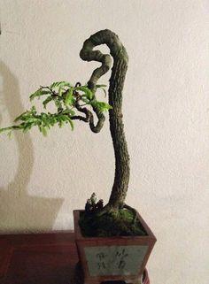 straight Bonsai Bonsai Fruit Tree, Bonsai Tree Care, Indoor Bonsai Tree, Bonsai Plants, Bonsai Garden, Trees To Plant, Pre Bonsai, Mini Bonsai, Tamarindus Indica