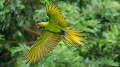 Reisen ist bunt – eine Expertin blickt voraus … Costa Rica Reisen, Vacation Trips, Animals, Pura Vida, Sloths, Caribbean, Photographers, Travel Advice, Animales