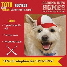 Use these 9 promotions from shelters and rescues throughout the country to set your creative muse free! Animal Shelter Adoption, Shelter Dogs, Pet Adoption, Shelters, Pet Helpers, Salt Lake County, 1 Month Olds, Show Me The Money, Poster Ads