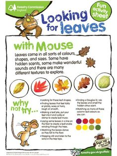 get kids outside searching for and learning about different leaves / forest commission england Forest School Activities, Nature Activities, Autumn Activities, Preschool Activities, Forest Classroom, Outdoor Classroom, Outdoor Education, Outdoor Learning, Outdoor Play