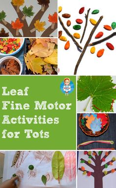 Leaf activities, crafts and books for toddlers and preschoolers - perfect for Tot School!