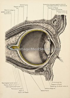 #optic www.vintagemedstock.com