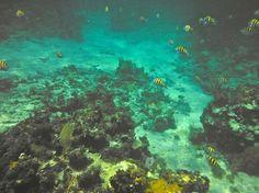 Couples Swept Away: Snorkeling