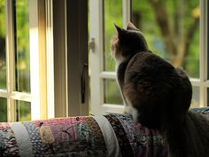 """* * """" Me thinks me be gonna invite friends over to stare out de window togethers."""""""