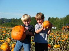 Fall Pumpkin Harvest Festival Carnation, Washington  #Kids #Events