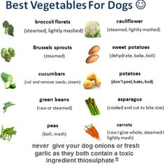 Vegetables are a rich source of vitamins,dog Vegetables antioxidants and fiber, and if you are a man, you probably dog diet veg. Dog Treat Recipes, Raw Food Recipes, Foods Dogs Can Eat, Safe Foods For Dogs, Best Food For Dogs, Dog Vegetables, Vegan Dog Food, Sprouting Sweet Potatoes, Make Dog Food