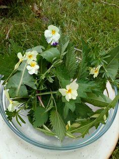 Korn, Plants, Flora, Plant, Planting