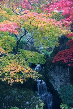 Beautiful Space, Beautiful World, Beautiful Gardens, Beautiful Pictures, Yamagata, Dame Nature, Les Religions, Tree Forest, Forest Flowers