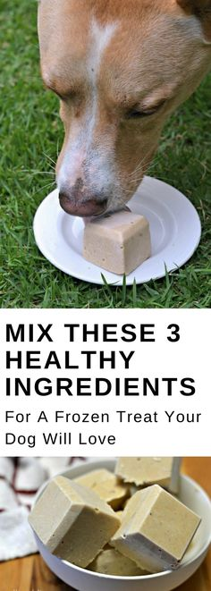 Healthy Dog Treats Mix these 3 ingredients for an easy, DIY, homemade dog treat that your pet will love. This frozen peanut butter and banana treat recipe will even keep your dog cool when it gets warm outside! Banana Dog Treat Recipe, Banana Treats, Dog Treat Recipes, Dog Food Recipes, Puppy Treats, Diy Dog Treats, Healthy Dog Treats, Summer Dog Treats, Frozen Dog Treats
