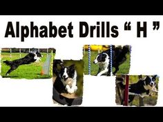Agility Dog Training, Alphabet Drills, Pam's Dog Academy www.pamsdogtraining.com Pamela Johnson, San Diego CA Dog Tricks and Dog Training too!