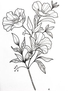 42 Simple and Easy Flower Drawings for Beginners - Cartoon District Easy Flower Drawings, Flower Sketches, Art Sketches, Art Drawings, Botanical Line Drawing, Floral Drawing, Hibiscus Drawing, Botanical Drawings, Art And Illustration