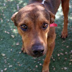 Sissy Lu - SPCA of Texas (McKinney)