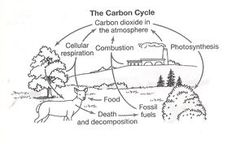 Water Carbon and Nitrogen Cycle Worksheet Color Sheet Answers . Water Carbon and Nitrogen Cycle Worksheet Color Sheet Answers . Blends Worksheets, Printable Worksheets, Worksheets For Kids, Writing Worksheets, Coloring Worksheets, Kindergarten Worksheets, Free Printables, Carbon Dioxide Cycle, Carbon Cycle