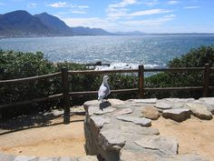Photo about Hermanus Bay, Western Cape South Africa. Image of watching, mountain, lookout - 957729 Holiday Resort, My Land, Dream City, Whale Watching, Cape Town, South Africa, Westerns, Photo Galleries, Landscape