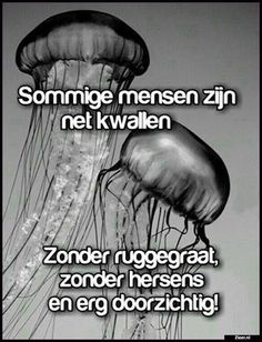 Sommige mensen zijn net kwallen Super Quotes, Great Quotes, Spiritual Quotes, Positive Quotes, Dutch Phrases, Funny Qoutes, Funny Humor, Dutch Quotes, Special Words