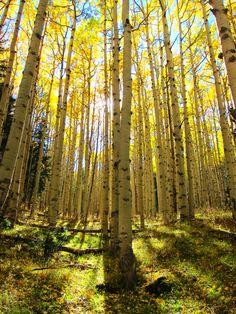 The beautiful hike of Lockett Meadow in Flagstaff, Arizona!