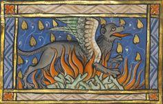 burning salamander depicted as a griffinBestiary, Thérouanne ca. 1270. LA, J. Paul Getty Museum, MS. Ludwig XV 3, fol. 95v