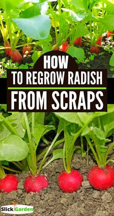 How To Regrow Radish From Scraps. Grow Tons Of Radish From Kitchen Scraps. Gardening For Beginners, Gardening Tips, Gardening Shoes, Bucket Gardening, Outdoor Garden Lighting, Outdoor Gardens, Autumn Garden, Raised Garden Beds, Raised Bed