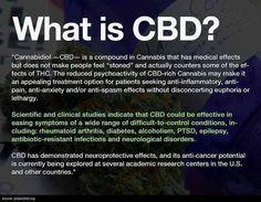 CBD What is?    #cannabissativa #cannabis#marijuana#popquiz#fun#happy#cannabiscommunity #weed#happy420#stonner#smartstoner#medicalmarijuana #follow#thegimmicks#like#me#legalizeit#ganja#legal#thc#cbd #cbdoil#plant#herbs#organic