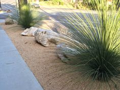 Southern Californiais frequently in a drought. The idea of having a vast, green lawn as the main groundcover in your landscapeis no longer realistic in Southern California. Water rates in San Diego have increased by 7.25% on January 1, 2014 and will increase again by 7.5% on January 1, 2015. ...