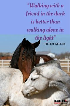 """Walking with a friend in the dark is better than walking alone in the light"" - Helen Keller. inspirational quote. horses and friendship #BRLequinenutrition #BRLequine #truefriendship"
