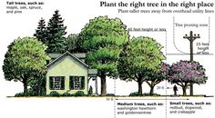 A guide from the Arbor Day Foundation on what trees to plant and where. art design landspacing to plant Privacy Landscaping, Front Yard Landscaping, Landscaping Trees, Trees And Shrubs, Trees To Plant, Tree Planting, Evergreen Trees, Landscape Design, Garden Design