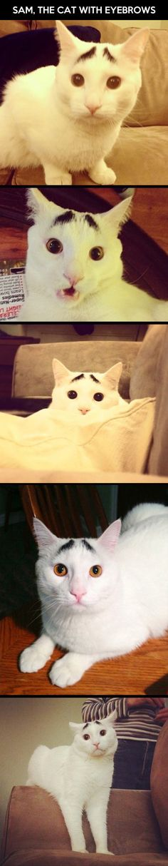 The cat with eyebrows…  Agh. I can't even handle how adorable he is. I just can't.