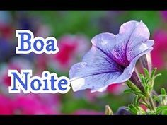 Boa Noite, Vídeo para what zap - YouTube