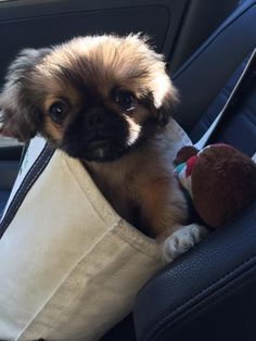 """Can't I just sit on your lap? It would be MUCH cozier."" 