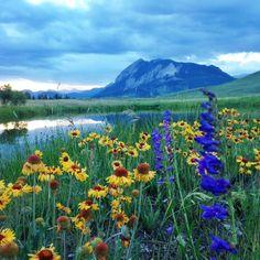 Wildflowers next to the lake