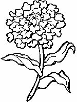Marigold Flower Coloring Pages - Printable Coloring Pages Hello Kitty Colouring Pages, Bear Coloring Pages, Pokemon Coloring Pages, Flower Coloring Pages, Printable Coloring Pages, Coloring Pages For Kids, Marigold Flower, Autumn Crafts, All Pokemon